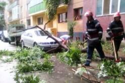 Az apja által ültetett fa zuhant autójára