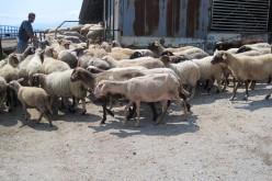 Ideiglenesen bezárják az összes állatpiacot