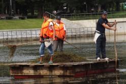 Szélmalomharc a Ligeti tó hínárjaival [VIDEÓ]