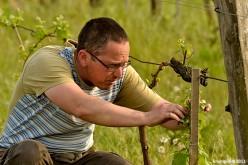 Tarnóczi Zoltán borai a Tulipánban