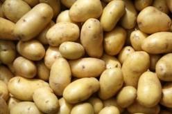 Kovásznai cég szállíthatja a krumplit az aradi fegyháznak