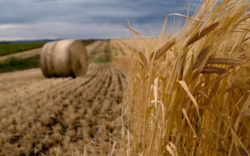 Arad megyében átlag 4700 euró/hektár áron adták el a földeket