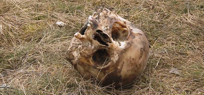 Emberi koponyát találtak egy illegális szeméttelepen