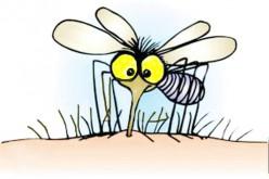Hétfőtől repülőgépes szúnyogirtás