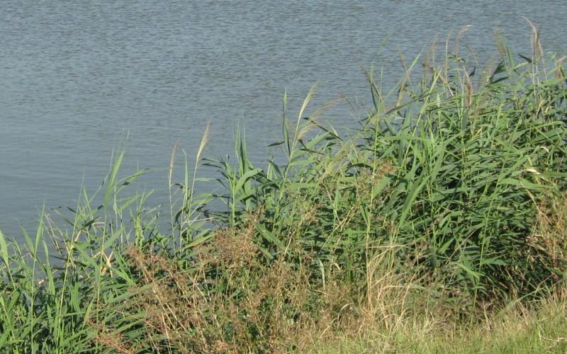 Védett övezet lett a nagylaki tó