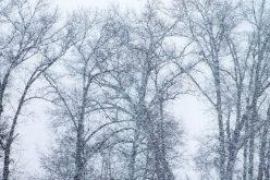 Délután havazik