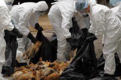 Megérkezett: egy kormorán hozta Aradra a madárinfluenzát