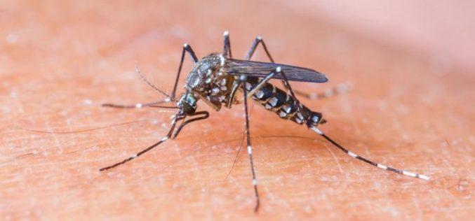Nyárvégi szúnyogirtás