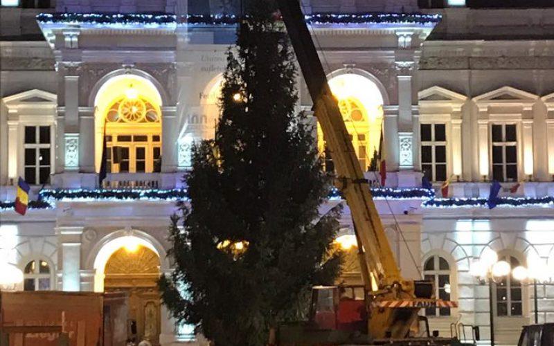 Leszállították Arad fenyőfáját: keddtől karácsonyfaként pompázik