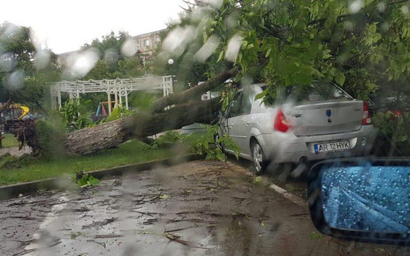 Fákat csavart ki a vihar