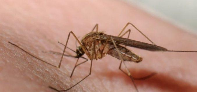Ma estétől földi szúnyogirtás Aradon