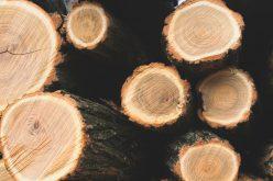 Erdőgarázdálkottak: húsz házkutatás