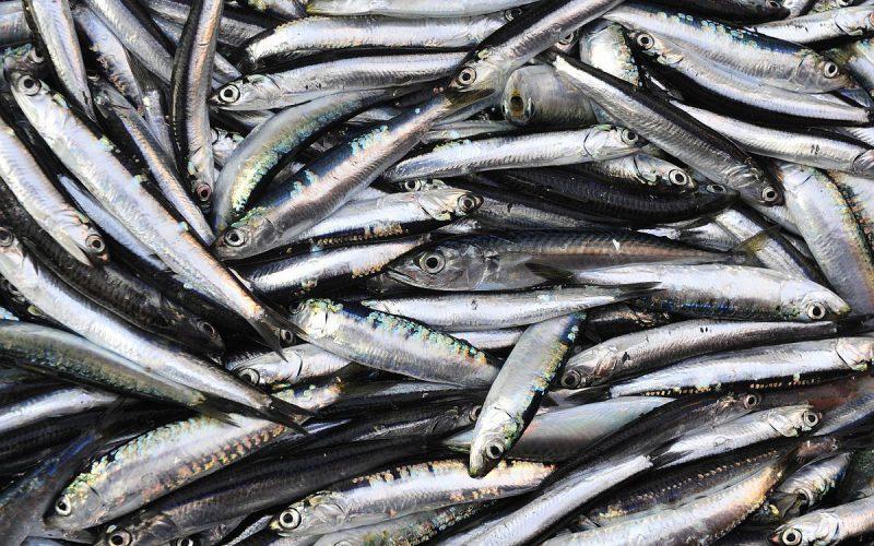 Nagylak: 3,46 tonna halból lesz állateledel