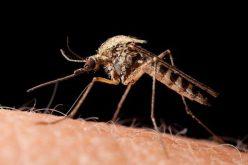 Folytatódik a szúnyogirtás Aradon