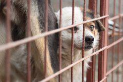Kutya-örökbefogadás a Váralja-negyedben