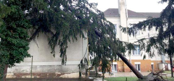 Rádőlt egy fa a megyei kórház gyermekosztályára