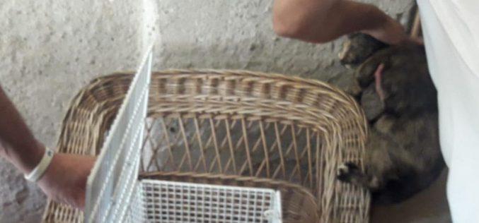 A helyi rendőrség kitűzte a nyári prioritást: macskaivartalanítás