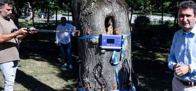 Műszerrel döntenek a közterületi fák sorsáról
