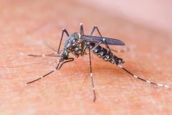 Hétfőtől újabb szúnyogirtás