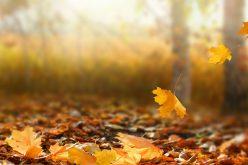 Hétfőn őszi napéjegyenlőség
