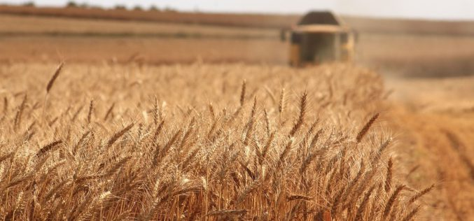 Befektetési alap szállt be egy sofronyai gabonakereskedő cégbe
