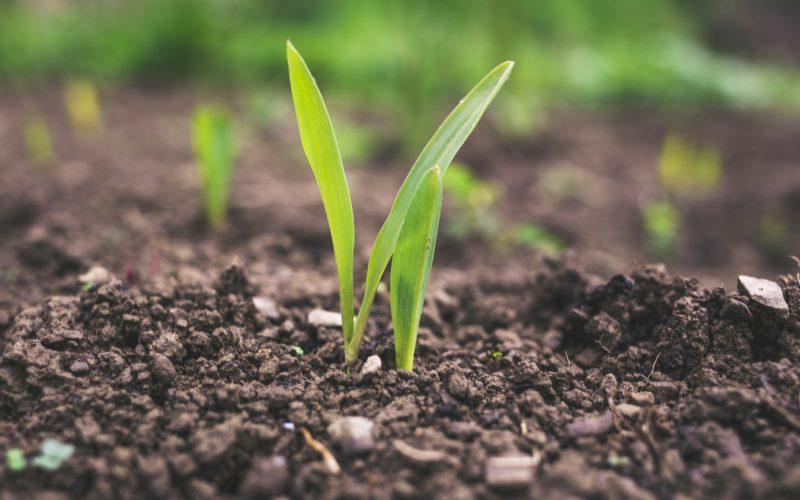 Arad megyében a mezőgazdaság vízhiánya 250 liter/négyzetméter