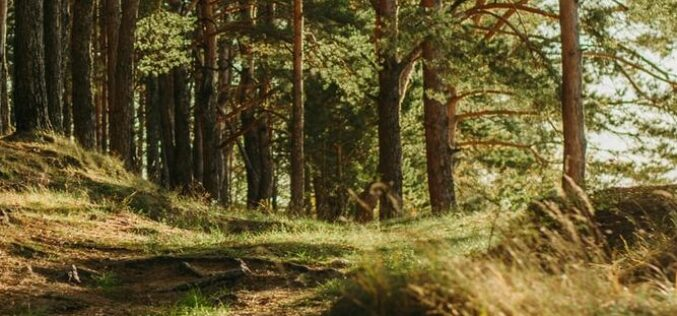 Évszázados erdők Romániában: Arad megye a harmadik