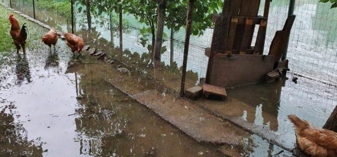 Tombol a Fehér-Körös: Martfalvát elzárta a víz