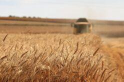 Szabálytalanságok: 71,3 millió eurót fizetnek vissza a romániai gazdák