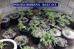 Házi növénytermesztés: lebuktak