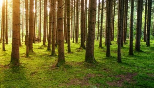 Újabb agyrém: vasárnaptól erdőzárlat Arad megyében