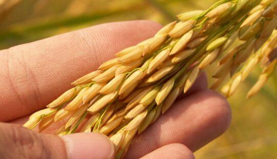 Igényelhetőek a mezőgazdasági támogatások