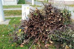 Tavaszi nagytakarítás Pécskán