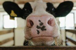 Aradi bűnszervezet uniós mezőgazdasági támogatásokat csapolt le
