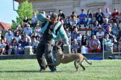 Kutyaidomítási világbajnokság Pécskán